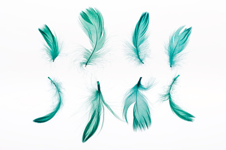 rows of green lightweight feathers isolated on white