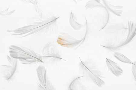 seamless background with grey lightweight feathers isolated on white