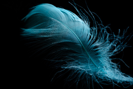 close up of soft blue feather isolated on black