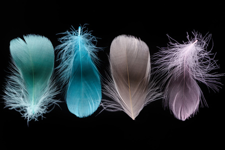 green, blue, grey and pink light plumes isolated on black