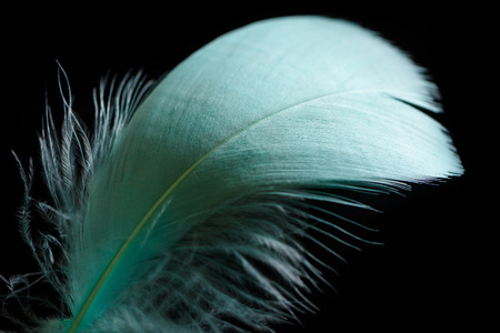 close up of lightweight green and soft textured feather isolated on black Фото со стока