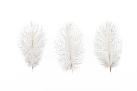 grey fluffy lightweight three feathers isolated on white Stock Photo