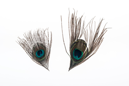 two multicolored peacock feathers isolated on white