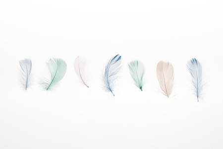 multicolored lightweight feathers isolated on white