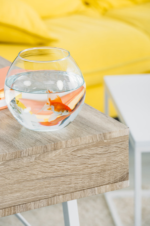 selective focus of aquarium with gold fish on wooden table