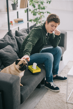man allergic to dog holding tissue near nose and touching pug on sofa