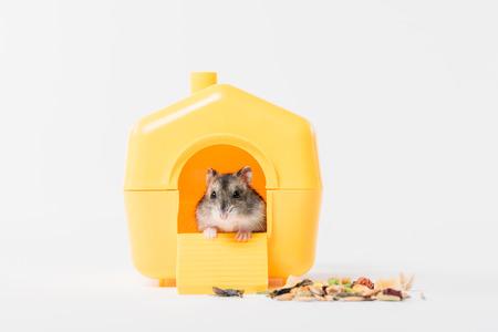 criceto carino e divertente all'interno di una casetta di plastica gialla su grigio Archivio Fotografico