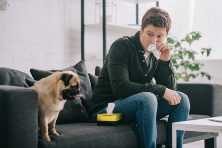 man allergic to dog holding tissue near nose and sitting on sofa with pug Stok Fotoğraf