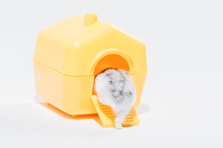 Back view of funny hamster getting into yellow pet house on grey background Zdjęcie Seryjne