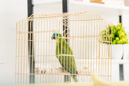 Selective focus of bright green amazon parrot sitting in bird cage near flowerpot Фото со стока - 120875941