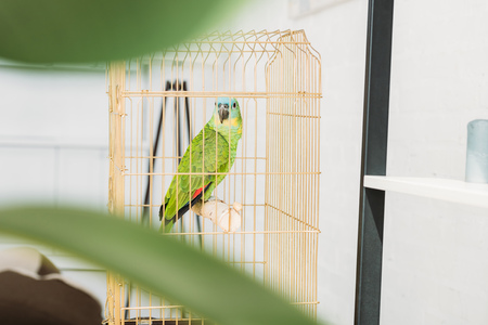 Selective focus of cute green amazon parrot sitting in bird cage
