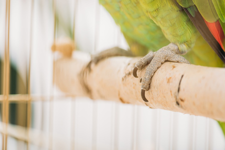 Selective focus of green parrot feet on wooden perch in bird cage