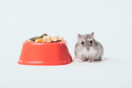 Cute funny hamster near orange bowl with pet food on grey background