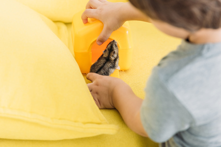 Selective focus of boy with cute hamster on yellow sofa Reklamní fotografie - 120876213
