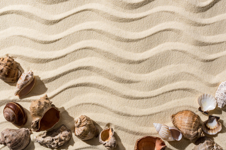 Top view of sandy background with smooth waves, seashells and copy space