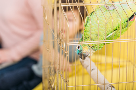 Selective focus of funny green parrot hanging head down in bird cage
