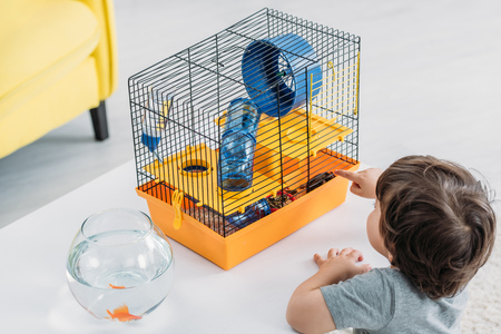 Cute boy pointing with finger at pet cage with blue plastic wheel and tunnel Stock Photo