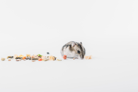 Funny, adorable hamster near dry pet food on grey background with copy space