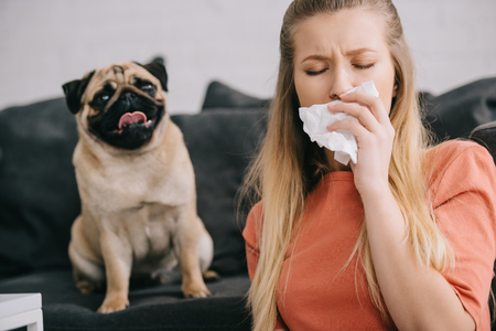 Selective focus of blonde woman allergic to dog sneezing in tissue near cute pet at home