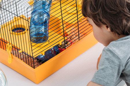 partial view of boy looking at orange pet cage with blue transparent tunnel