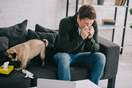 handsome man allergic to dog holding tissue while sneezing near cute pug at home