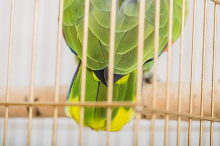 Selective focus of bright green and yellow parrot tail in bird cage