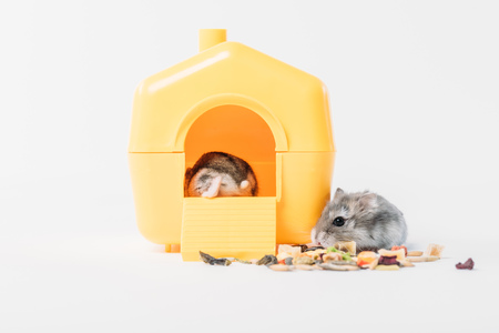 funny fluffy hamster near dry pet food and one hamster inside yellow pet house on grey