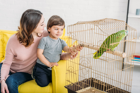 Happy mother with adorable son looking at green parrot in bird cage at home 写真素材