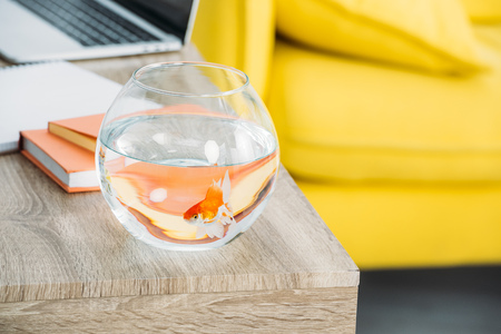 selective focus of aquarium with gold fish near books on wooden table Imagens
