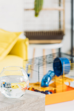 selective focus of fish bowl and pet cage with blue plastic wheel and tunnel Zdjęcie Seryjne