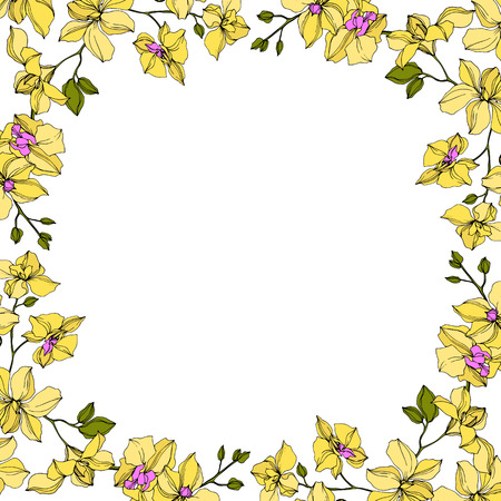 Vector Orchid floral botanical flowers. Wild spring leaf wildflower isolated. Yellow and green engraved ink art. Frame border ornament square obn white background. Иллюстрация