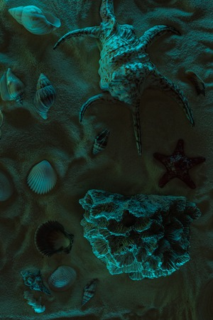 top view of seashells, starfish and coral on sand with dark light