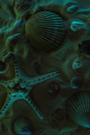 Top view of seashells and starfish on sand with dark light