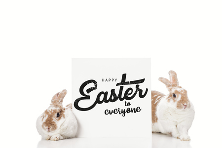 cute bunnies near board with black happy Easter to everyone lettering isolated on white 写真素材