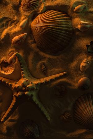 Top view of seashells and big starfish on sand with orange light
