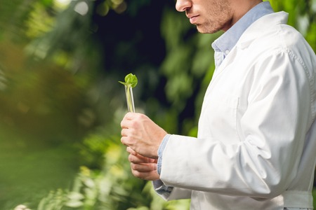 Cropped view of scientist in white coat holding flask with plant sample in orangery Stock Photo