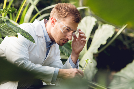 Handsome scientist in white coat and goggles taking plant sample in flask in orangery Stock Photo