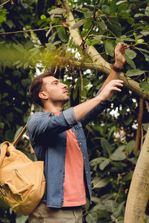 Traveler with backpack touching tree branches in tropical forest Stock Photo