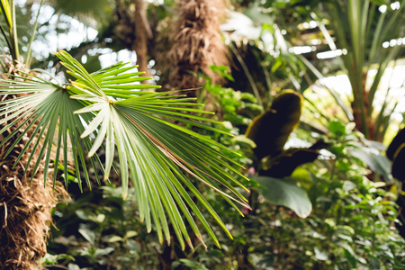 Selective focus of green palm leaves in orangery