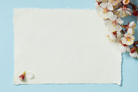 Top view of tree branch with blooming spring flowers on white blank stripped card on blue background