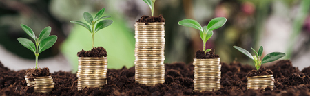Panoramic shot of coins with green leaves and soil, financial growth concept