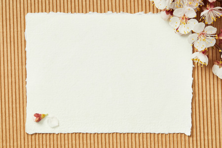 Top view of tree branch with blooming spring flowers on white blank stripped card on textured background