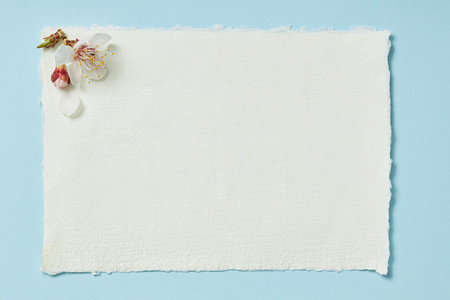 Top view of blooming spring flowers on white blank stripped card on blue background