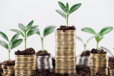 Coins with green leaves and soil isolated on white, financial growth concept
