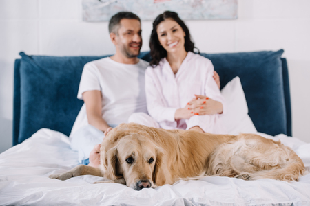 selective focus of cute golden retriever lying on bed near man and woman
