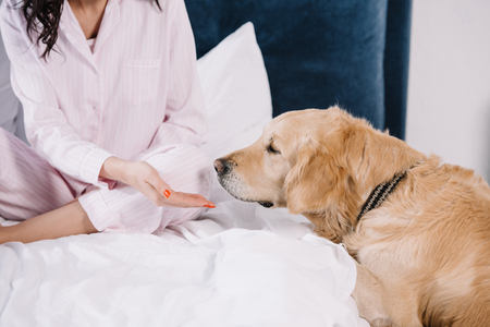 cropped view of woman gesturing near golden retriever at home
