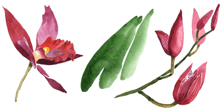 Marsala orchid floral botanical flowers. Wild spring leaf wildflower isolated. Watercolor background set. Watercolour drawing fashion aquarelle isolated. Isolated orchids illustration element.