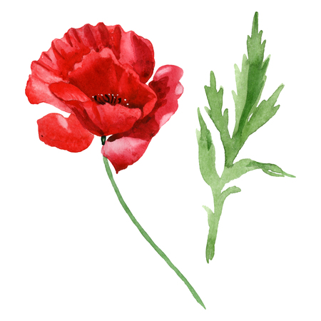 Red poppy floral botanical flowers. Wild spring leaf wildflower isolated. Watercolor background illustration set. Watercolour drawing fashion aquarelle isolated. Isolated poppies illustration element.