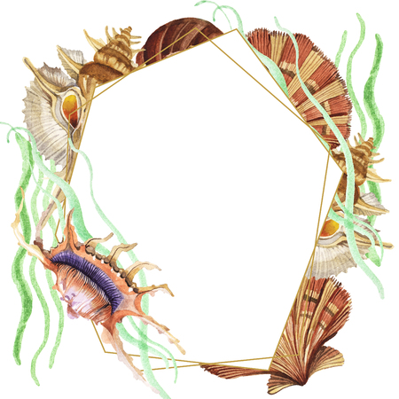 Summer beach seashell tropical elements. Watercolor background illustration set. Watercolour drawing fashion aquarelle isolated. Frame border ornament square.