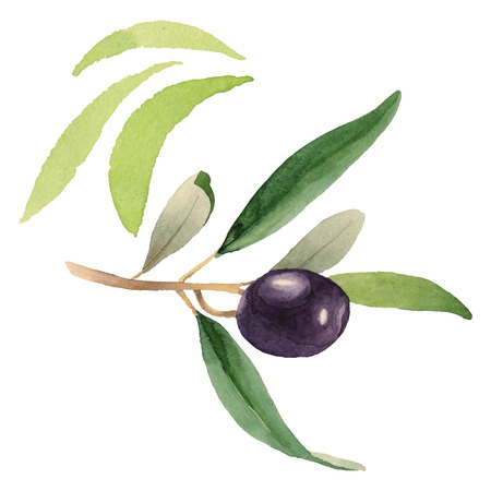 Fresh olives healthy food. Watercolor background illustration set. Watercolour drawing fashion aquarelle isolated. Isolated olive illustration element.